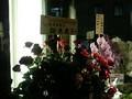 細木数子は紅いバラ