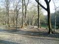 木立の中のブランコ