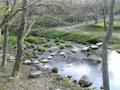 敷地内の渓流